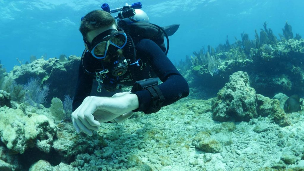 Scuba Diver checking dive computer