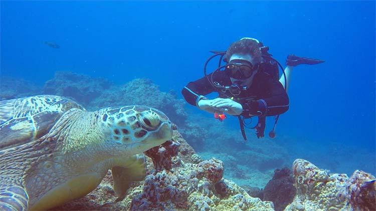 Scuba Diver & Turtle