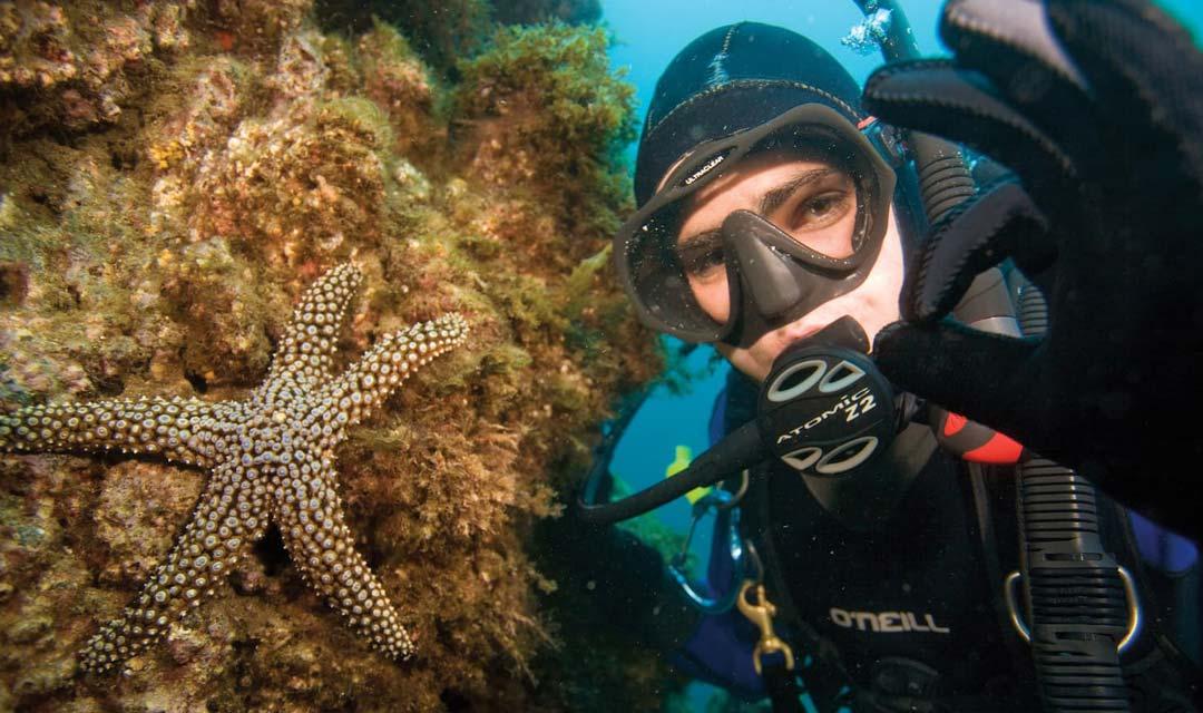 Diver Starfish Okay