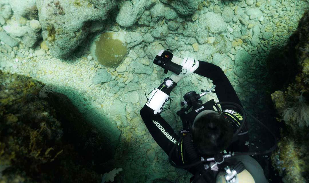 SDI-Diver