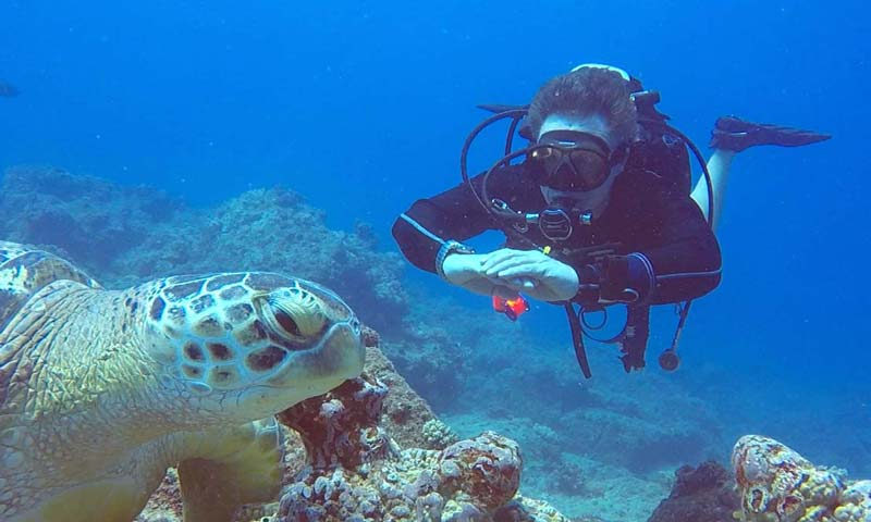 Diver & Turtle